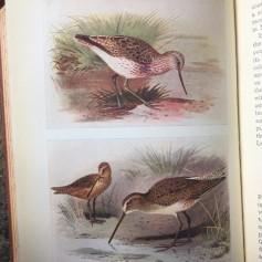 frann brit isle birds inside 2