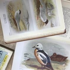 frann brit isle birds inside