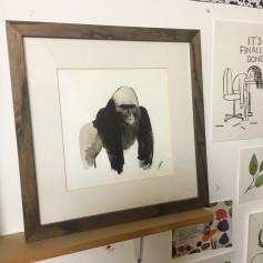 frann gorilla